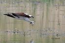 Fischadlers Krallen