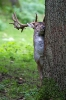 Heimische Wildtiere