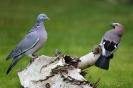 Stammtisch-Gespräch
